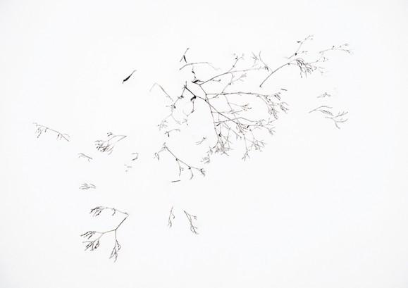 Ohuita tummia kasvinrankoja pilkistää lumesta.