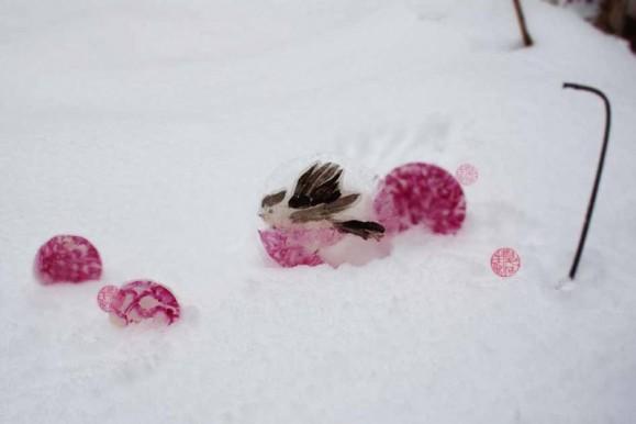 Magentanpunaisia kuviollisia palloja, yhden päällä epämääräinen ruskea lintu. Valkoisesta maasta nousee kaksi mustaa lankaa, yläkulmassa hieman tummaa.