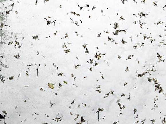 Jonkinlaisia tummia siemeniä valkoisella taustalla.