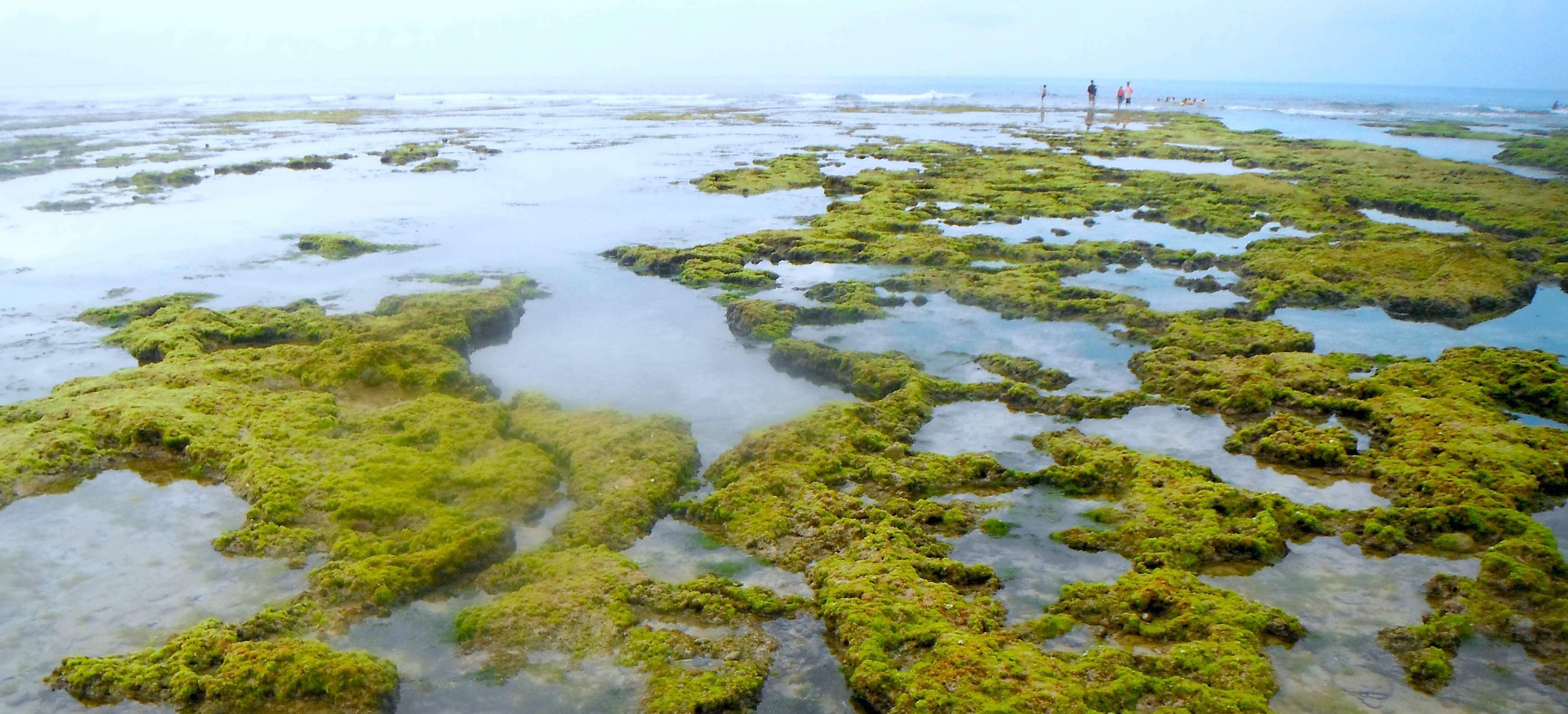 Autio maisema. Sammalta vedenpinnan yläpuolella. Etäisyydessä ihmisiä, katoava horisontti ja vaaleansininen taivas.