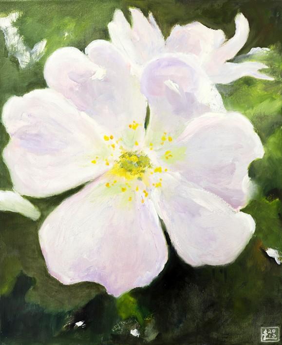 Suuri valkoinen kukka tummanvihreällä taustalla.