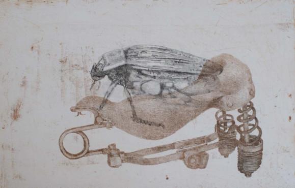 Kovakuoriainen pyörän satulan päällä. Valkoinen tausta.